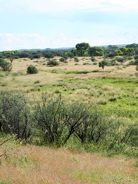 Sacaton Grasslands