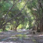 Cienega Creek: State of the Watershed